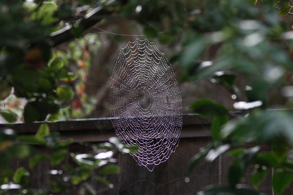 Spiderweb with water