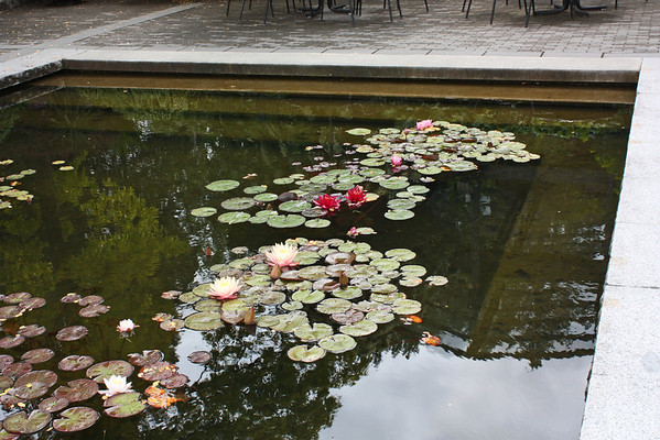 Lily pond, Phyllis Bentall Garden