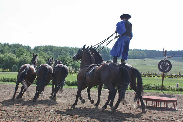 Man riding five horses