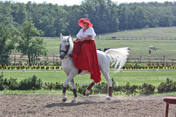 Woman riding Lippizaner sidesaddle