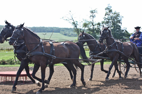 Wagon pulled by 4 horses