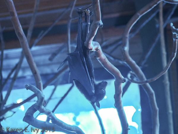 Bat, Budapest Zoo